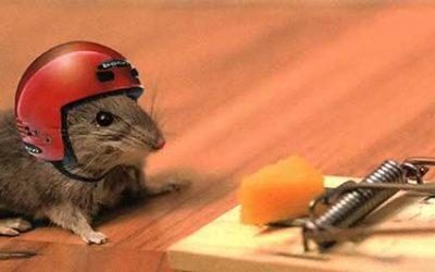 El ratón de la corte y el de campo